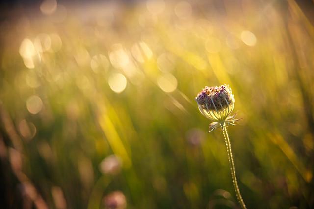 Poemareflexiona de verano VI
