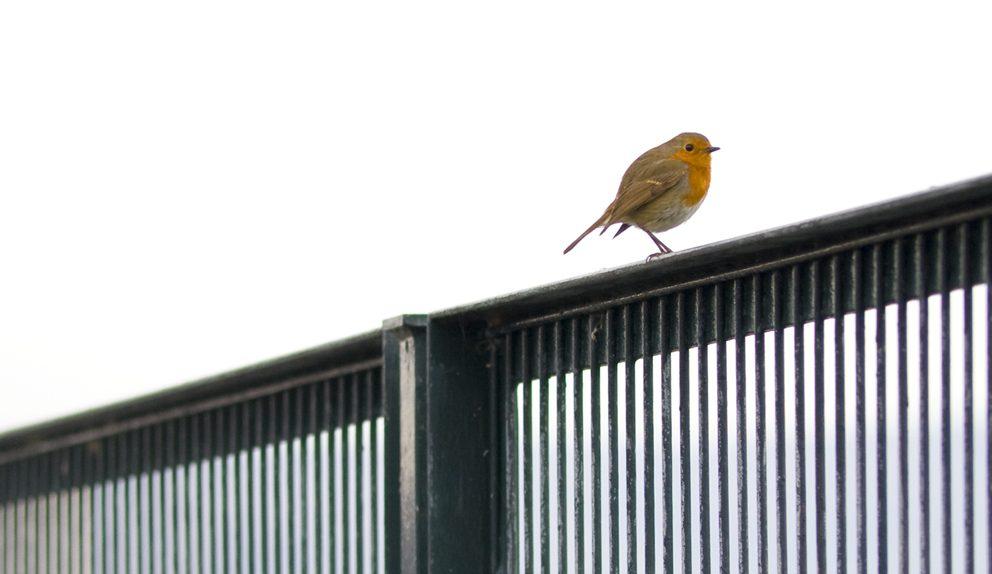 8 poemas de Alejandra Pizarnik, un ave de las emociones