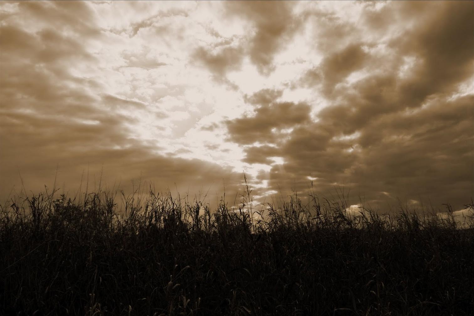 Mente y alma en la poesía de Pablo Mata